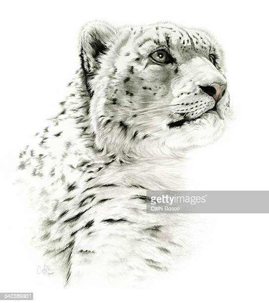 Snow Leopard by Cathi Bosco