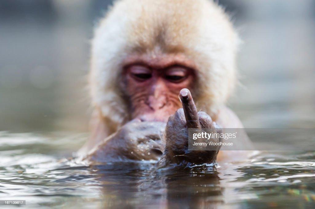 Snow monkey bathing in hot spring