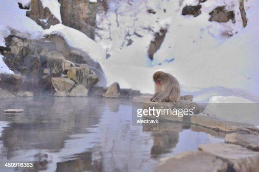 Snow monkey portrait