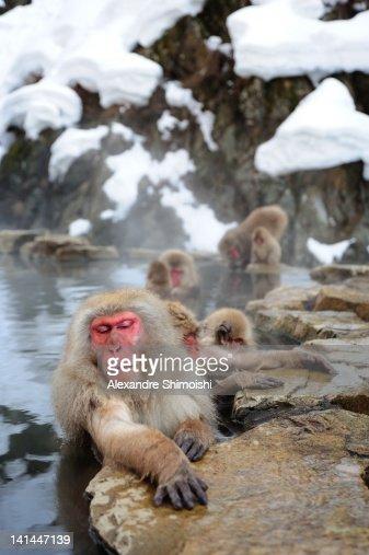 Snow Monkeys in Jigokudani Hot Spring at Nagano