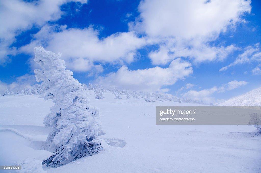 Snow Monster, Hakkodasan