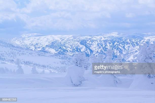 Snow Monster,Hakkodasan,Aomori,Japan