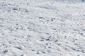 http://www.istockphoto.com/photo/snow-mounds-gm654609286-120095811