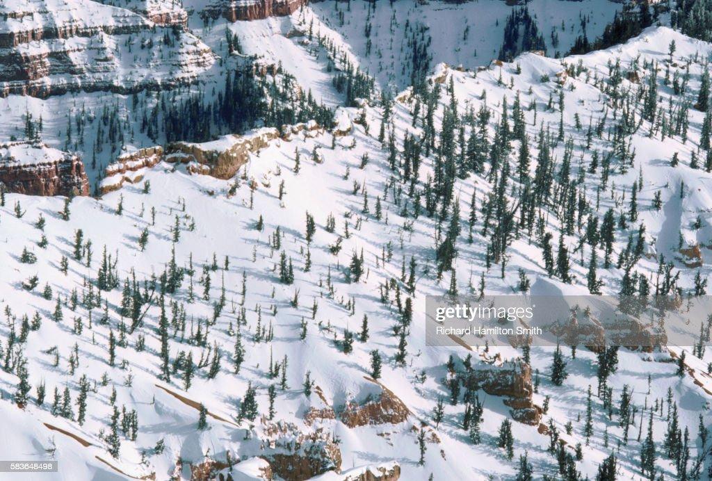 Snow on the Slope's of Utah's Cedar Breaks