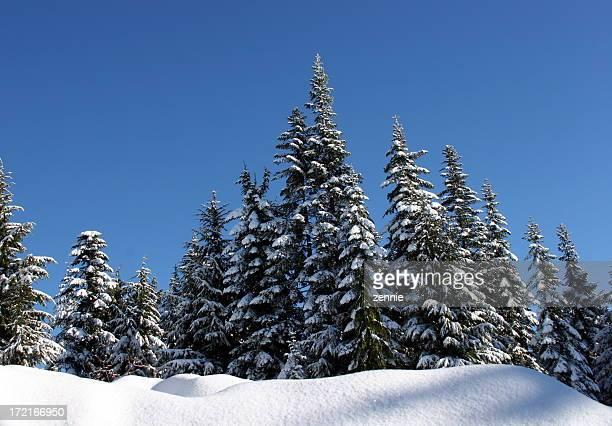 Snow Scene: Immaculate