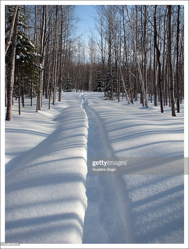 Snow trail through forest : Stock Photo