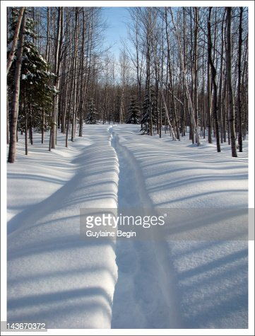 Snow trail through forest : Foto de stock