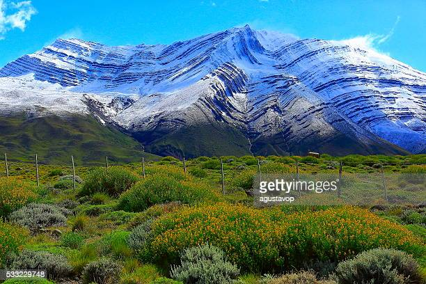 Enneigés des Andes, le parterre de fleurs de printemps pampa, Chalten, la Patagonie, de Los Glaciares