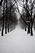 snowcovered alley of the park