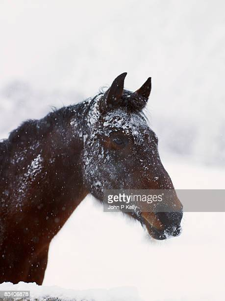 Snow-covered horse