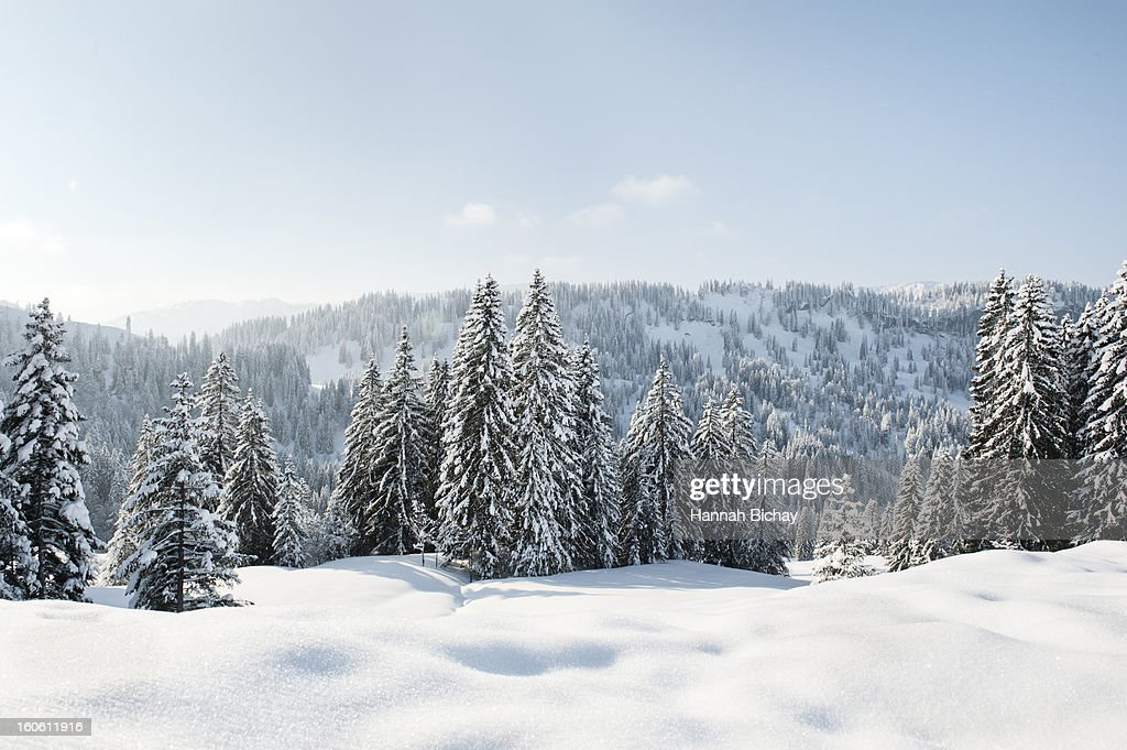 Snow-covered landscape and evergreens in Germany : Stock Photo