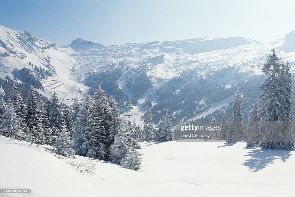 Snow-covered trees and mountains, winter : Stock Photo