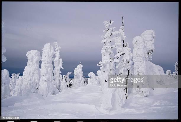 Snow-Covered Trees on Ski Slope