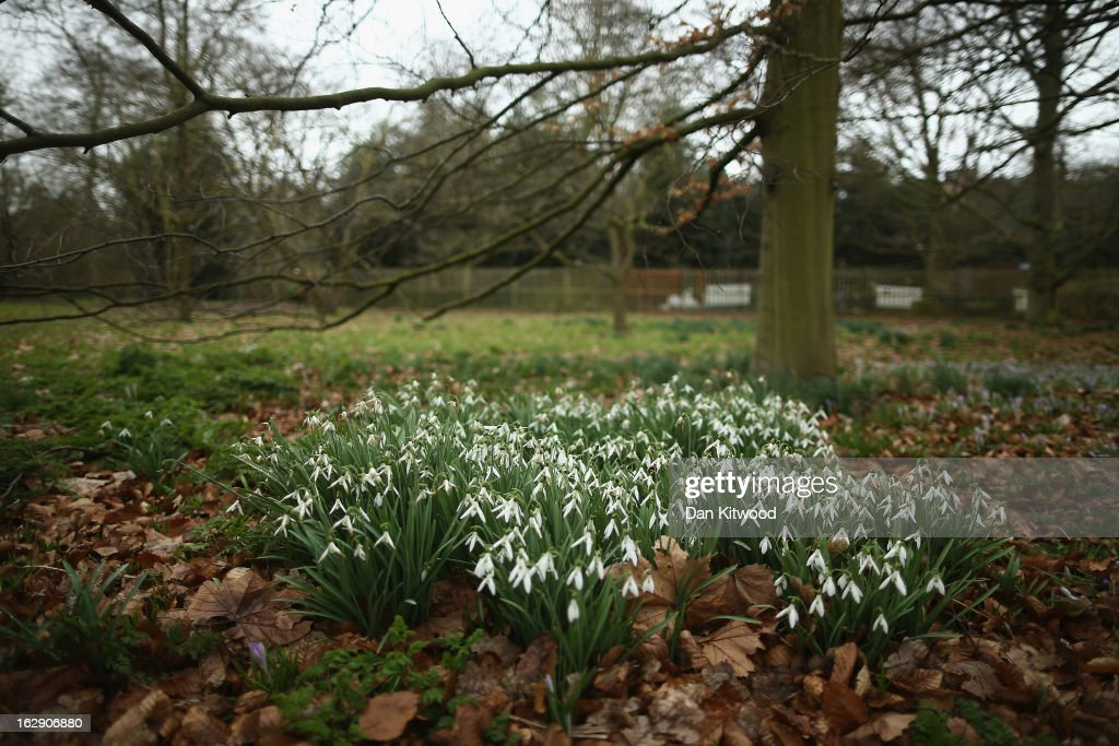 The First Day Of Spring At Kew Gardens Getty Images