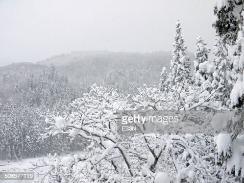 Snowfall in a Winter forest. : Stock Photo
