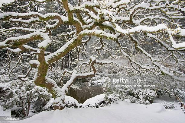Snowfall in Portland Japanese Garden, Portland, Oregon, USA