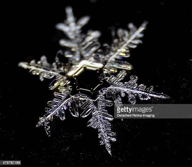 Snowflake Detail Dendritic
