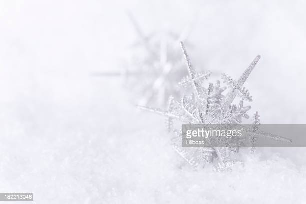 Snowflakes in the Snow