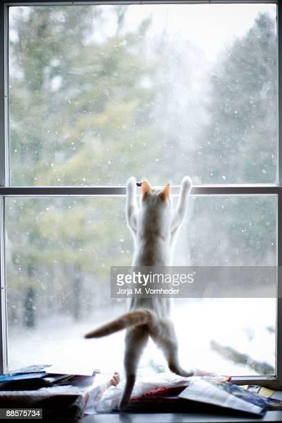 Snowhunting