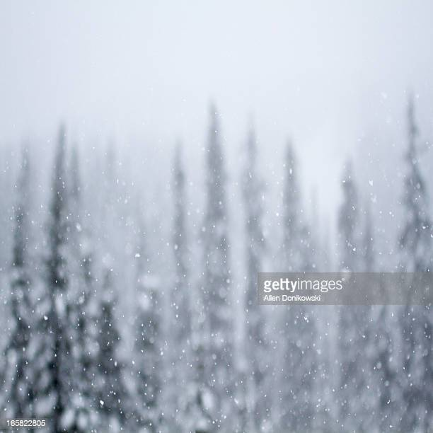snowing falling in the forest