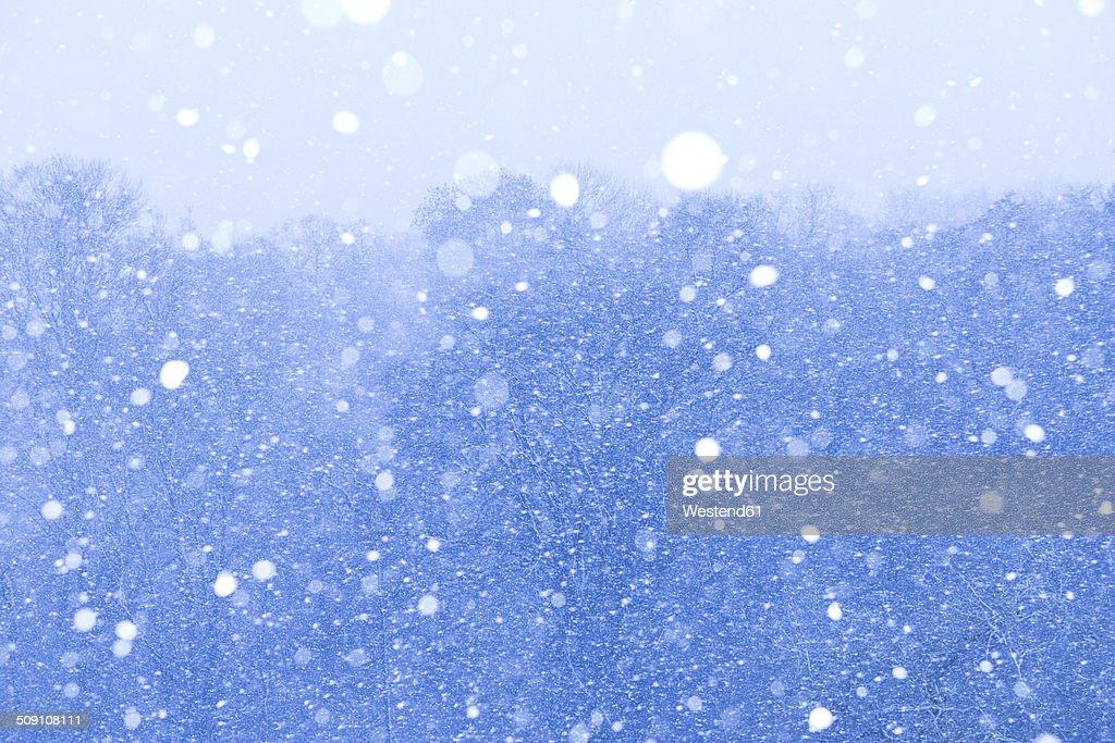 Snowstorm : Stock Photo