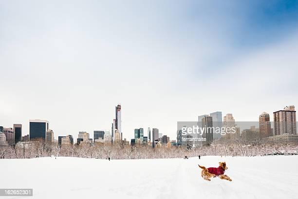 Snowy Central Park, à New York