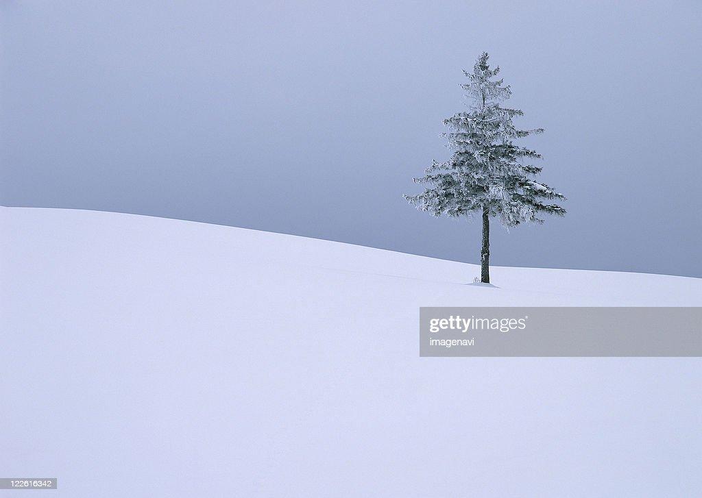 Snowy Field : Stock Photo