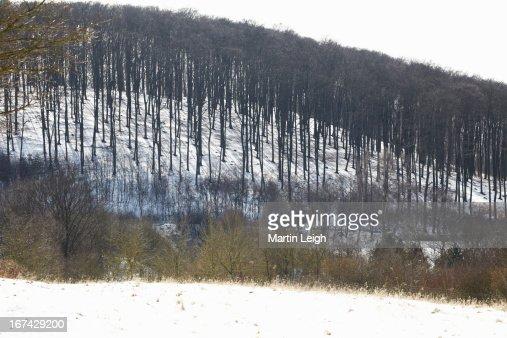 snowy forest on hillside : Foto de stock