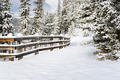 Snowy Forest Path Lined with a Wooden Fence on a Sunny Winter Day. Banff National Park, Alberta, Canada.