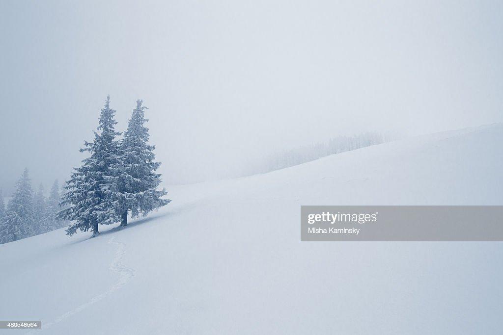 Verschneiten Wald : Stock-Foto