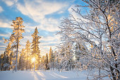 Snowy landscape at sunset, frozen trees in winter in Saariselka, Lapland, Finland