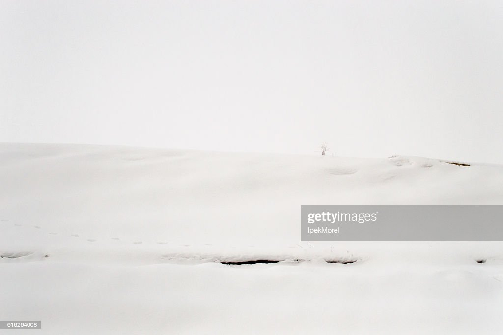 Snowy Landscape of an Empty Field : Stock Photo