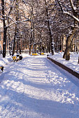 snowy park at winter morning. background, seasonal.