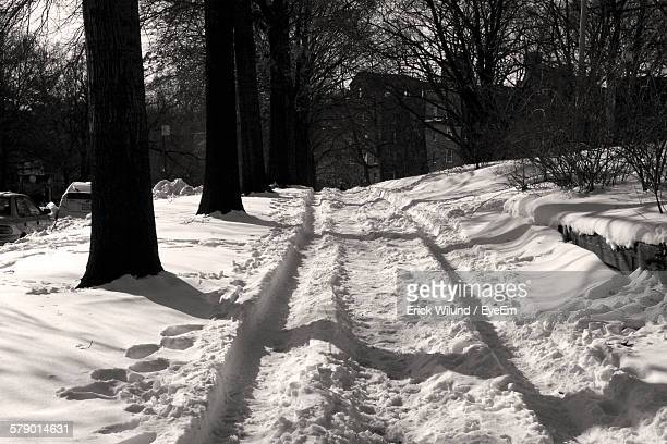 Snowy Pathway Amidst Trees In Park