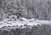 A dense forest covered in snow while the still mountain lake reflects