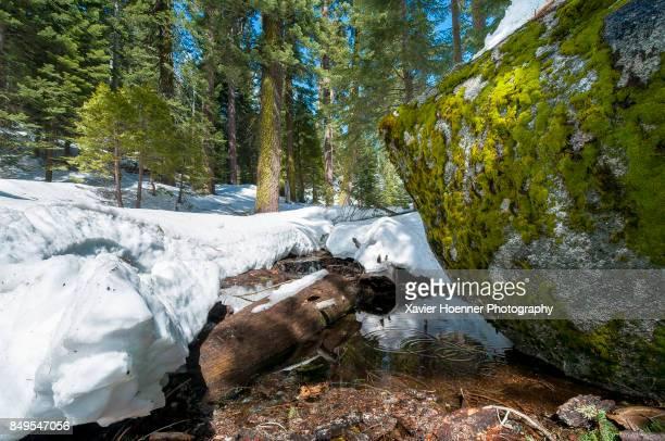 Snowy River | Yosemite National Park
