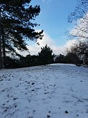 Scene of snow and trees. Winter at New York Botanical Garden.