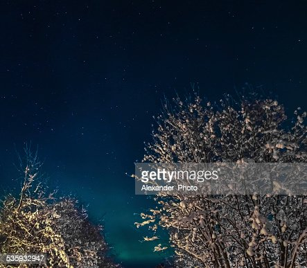 Snowy trees against the nordic winter sky : Stock Photo