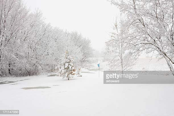 Snowy Winter Scene with Trees and Birdhouse