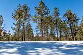 Tree shadows in the snow, at Bryce Canyon National Park, Utah