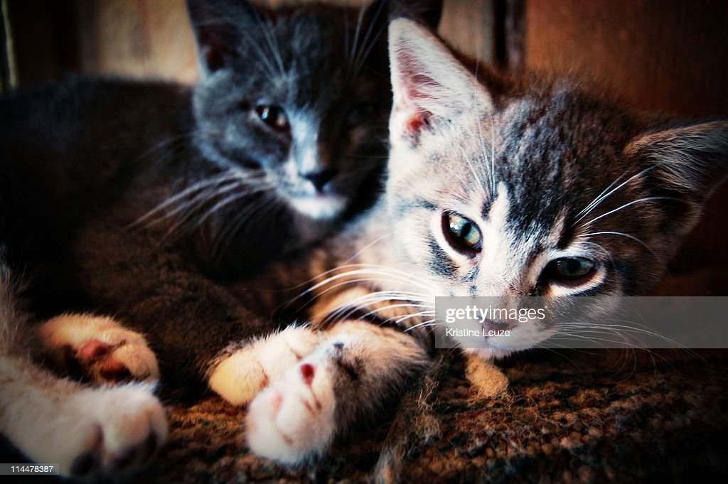 Snuggly Kittens : Stock Photo