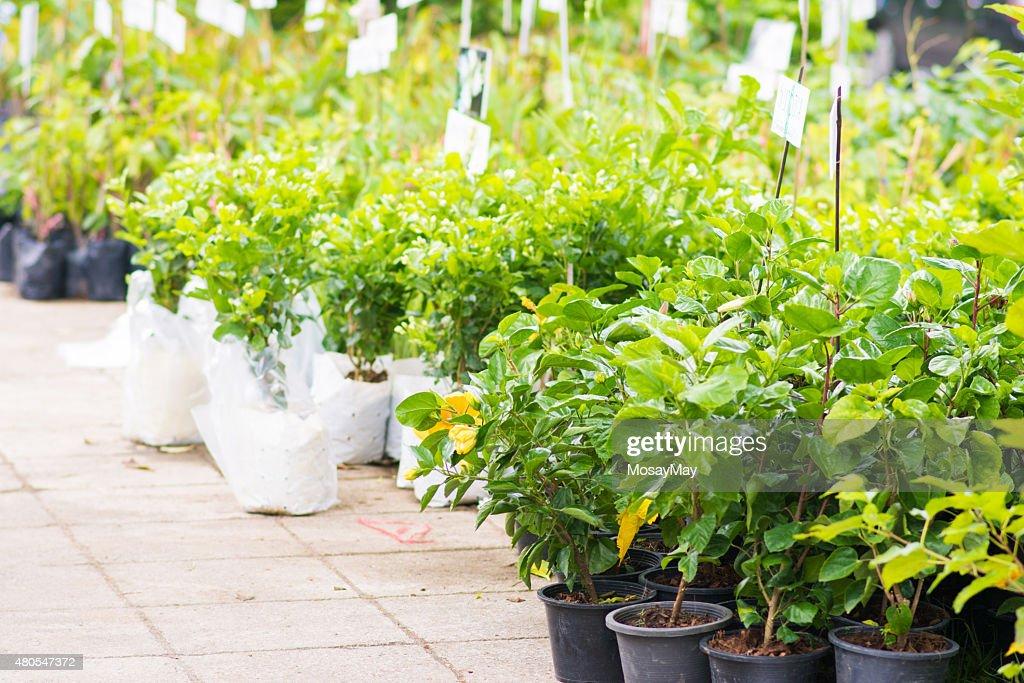 so many plants  in tree market : Stock Photo