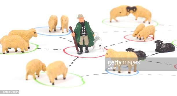 Social Media with shephard and sheeps