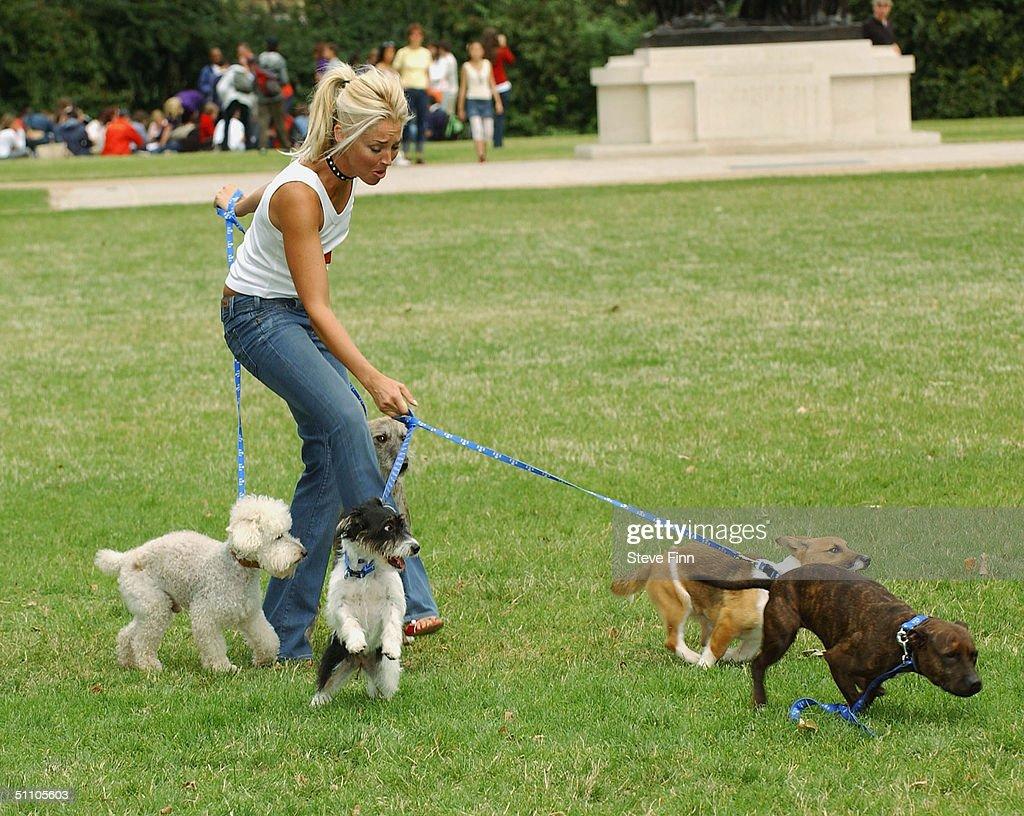 London Battesa Dog Home Number
