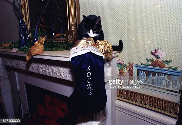 Socks the Cat the First Pet of President Bill Clinton and First Wife Hillary Rodham Clinton with black fur white face and amber eyes perched on an...