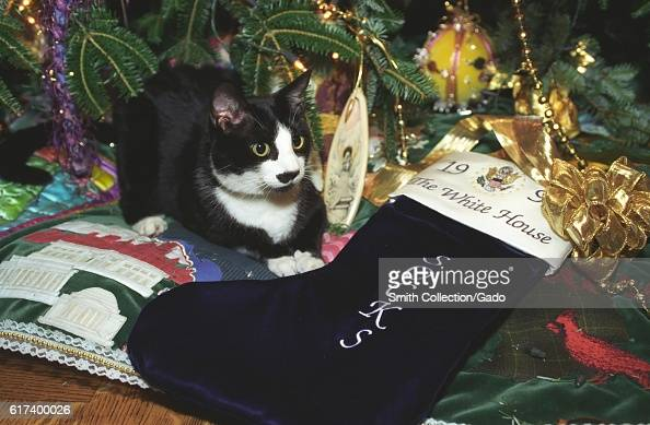 Socks the Cat the First Pet of President Bill Clinton and First Wife Hillary Rodham Clinton with black fur white face and amber eyes rests on the...
