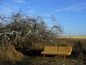 An empty couch in the wilderness on a sunny fall day, with crooked trees and prairie landscape in background.