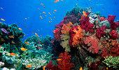 Beauitful Fiji soft coral gardens
