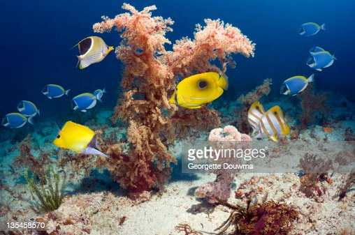 Soft coral with tropical reef fish