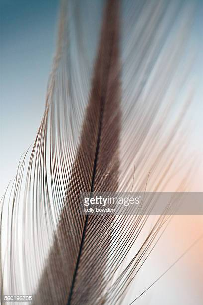 Soft delicate feather macro close up